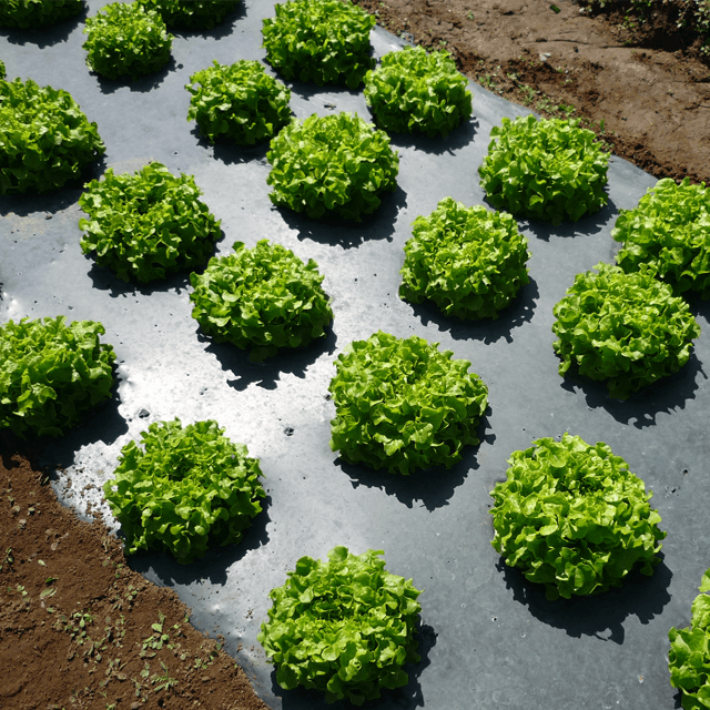 Agriculture Sheets
